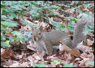 squirrel3