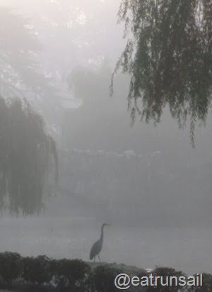 Heron in the fog