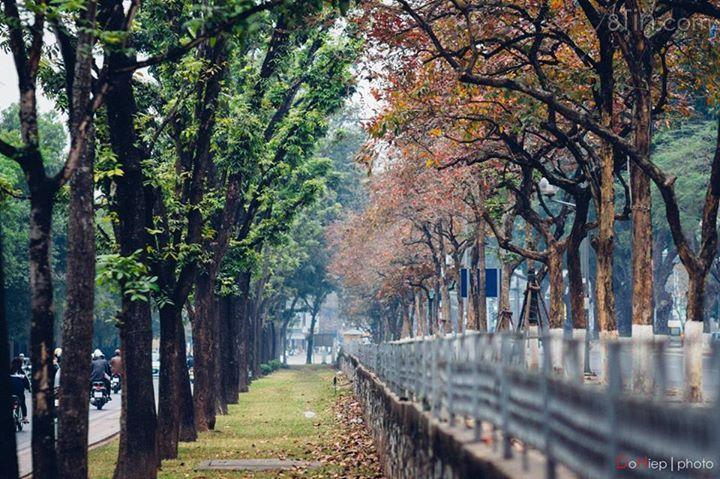 Kim Mã mùa thay lá <3 (Ảnh: Nguyễn Đỗ Hiệp)