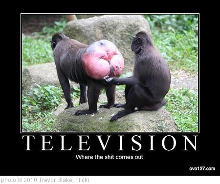 'Trevor Blake: Television' photo (c) 2010, Trevor Blake - license: http://creativecommons.org/licenses/by-sa/2.0/