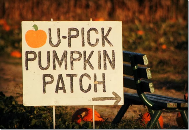 The Truth about Pumpkin Patch 2013 -Take 1 and take 2