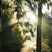 See The Light-David Doherty.JPG