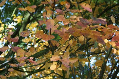 20081009 (9) (Small)
