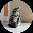 Image Google de pascal houdu