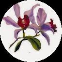 Image Google de karine karcher