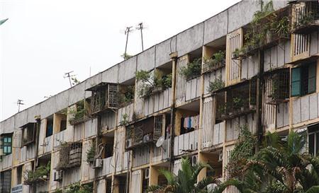 Cải tạo nhà chung cư