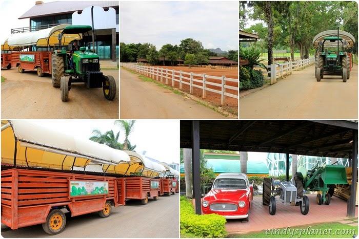 Chok chai Farm activities