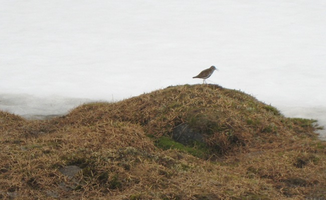 DUNLIN? ANY OFFERS?