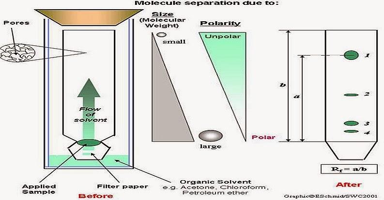 Chromatography experiment essay