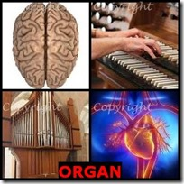 ORGAN- 4 Pics 1 Word Answers 3 Letters