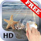 Sea Star HD. Live Wallpaper.