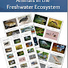 Animals in the Freshwater Ecosystem