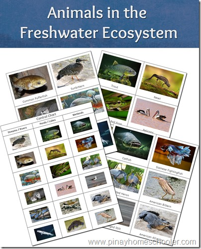 FREE Animals Printable in the Freshwater Ecosystem