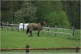 Pferde gibt es hier auch