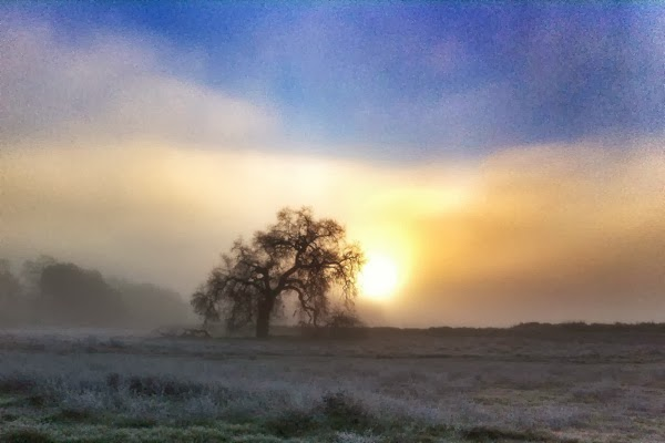foggy sunrise tree