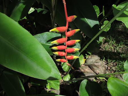 22. floare de banan.jpg