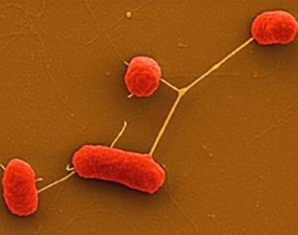 bacterias_resistentes