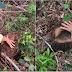 Bán rừng thu 30 triệu, trồng lại tốn… 2,2 tỷ đồng!