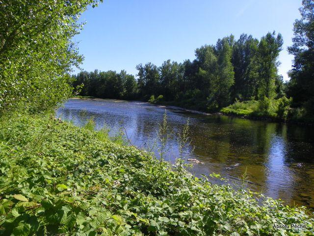 Loire rive droite au Moriaud, aval Saint-Laurent-la-Conche photo #1183