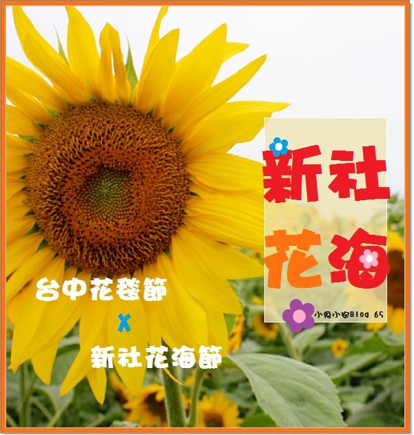 『台中』2011年新社花海節‧人海、花海熱鬧登場。