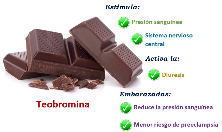 Beneficio del chocolate - teobromina