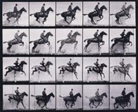 Eadweard Muybridge - Horses in Motion