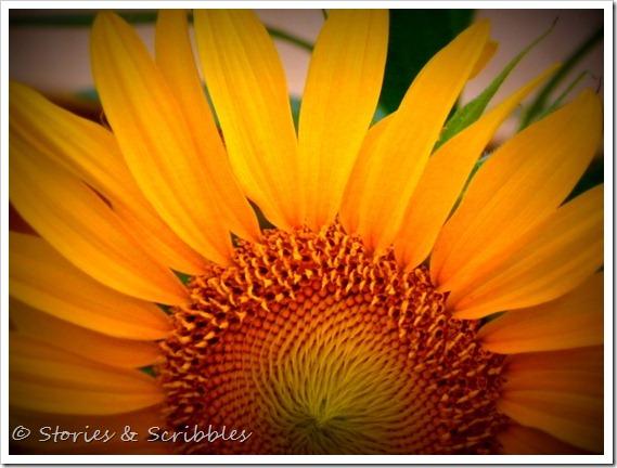 Summer flowers (2)