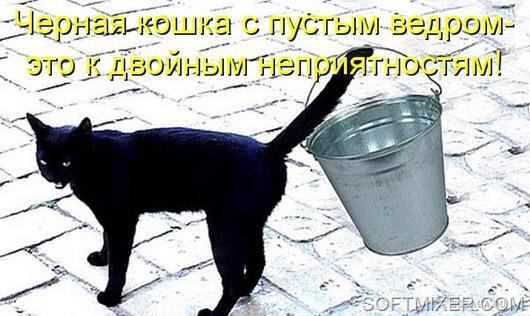 kotomatritsa_1-