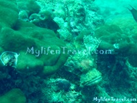 Koh Lipe Diving 25