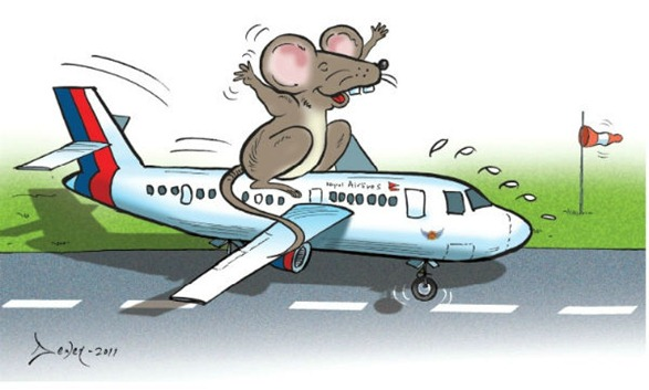 musa-rat-in-nepal-airlines