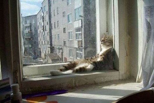 Cats_relax_02_thumb[1]