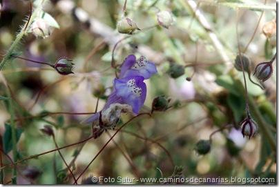 6171 Azuaje-Carretería-Azuaje(Picopajarito balcánico)