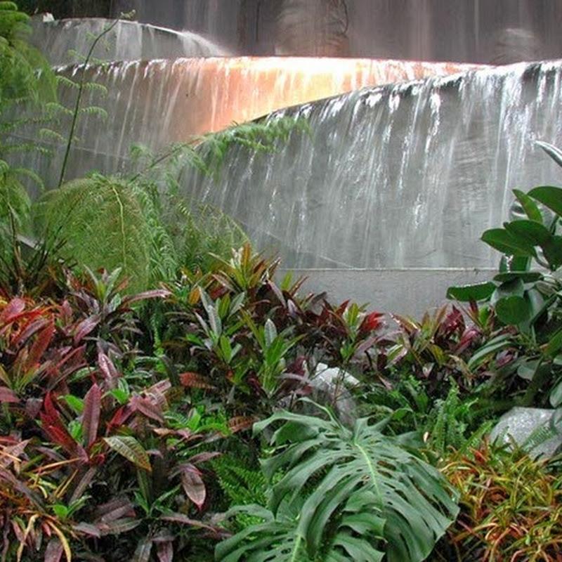 Le foreste pluviali tropicali ospitano da sole circa una metà delle specie viventi animali e vegetali terrestri.