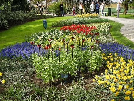 Flori Olanda: parcul floral Keukenhof