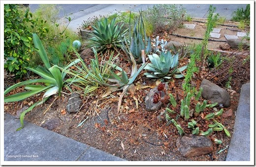 131002_driveway_succulent_bed_before_01