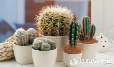 Decorar con cactus Una planta con la que no pinchars