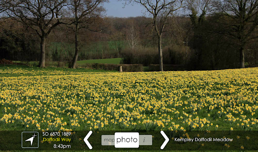 Daffodil Way- screenshot thumbnail