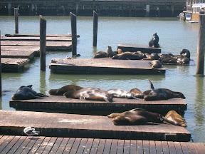 367 - Los leones marinos.JPG