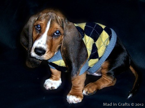 puppy sweater