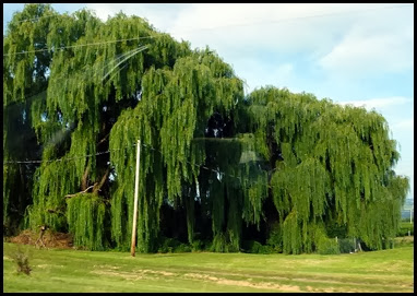 01 - Travel to Corning - Weeping  Willow on Rt 414