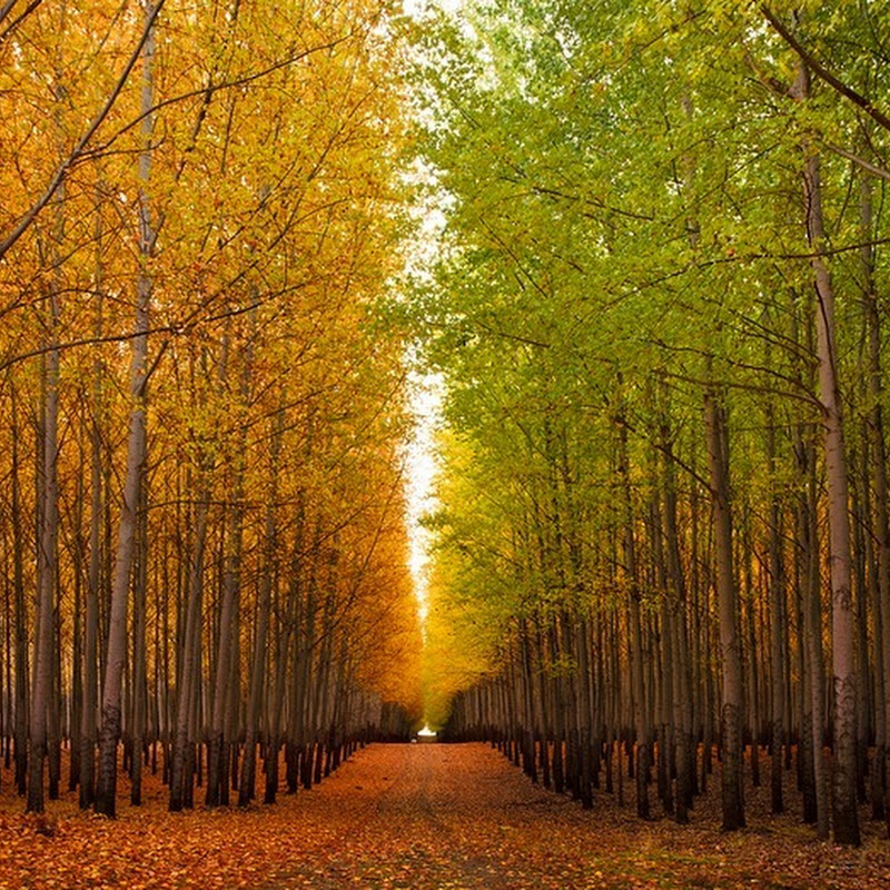 Boardman Tree Farm in Oregon, USA