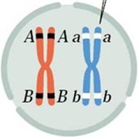 relationship between crossing over and genetic recombination is a major