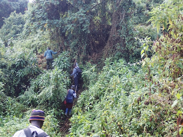 Gorilla Tracking 001.JPG