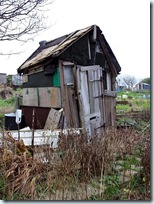 old allotment shed