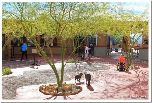 Succulentore Arizona Day 3 Tucson Sonora Desert Museum Survivors Nursery Botanical Garden