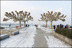 Lac Léman Genève - Glace-33.jpg