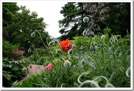 Garden  Courtesy, Claude A. Simard