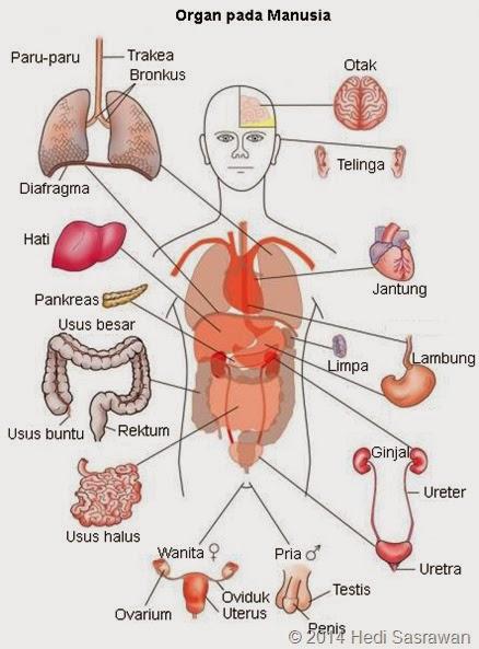 Anatomi Körper