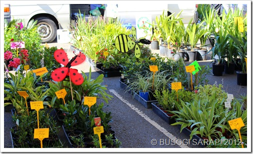 SMALL POTTED PLANTS, ROCKLEA SUNDAY DISCOVERY MARKET© BUSOG! SARAP! 2012