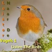 Listen The Birds 1